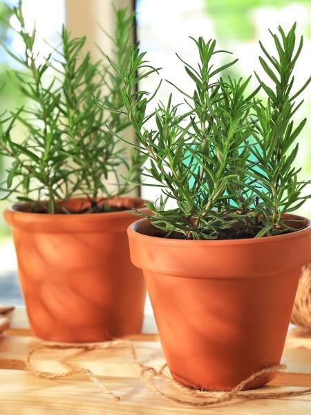 Saiba como as plantas podem mudar as energias da casa - iStock