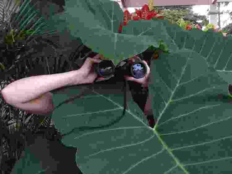 plantados pessoa escondida atrás de folhagem binóculo espiã - Getty Images/EyeEm - Getty Images/EyeEm