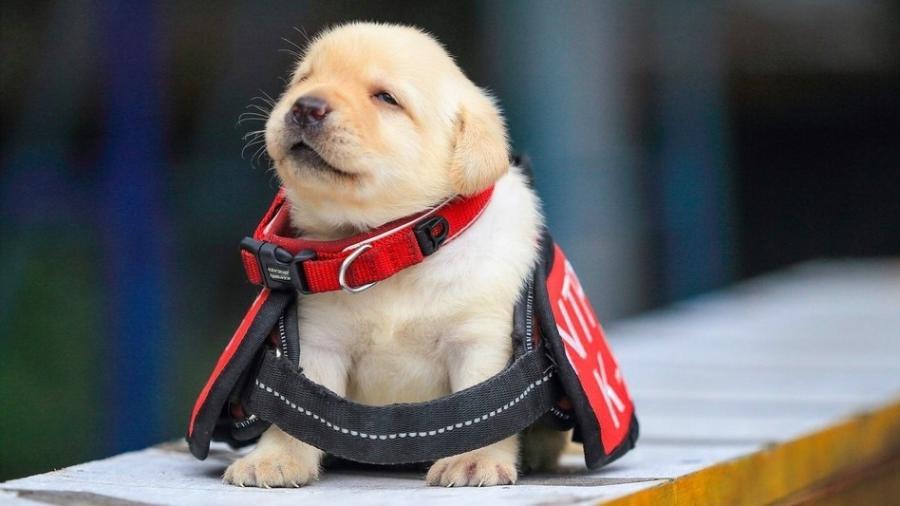 A unidade K-9 da polícia de Taiwan usa cachorros para ajudar no combate às drogas e em situações de ameaça com bombas - Reprodução/NPA/Facebook