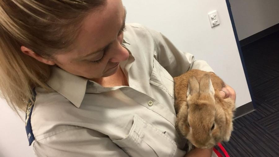O animal foi entregue ao resgate e está em busca de novo lar  - Reprodução/Twitter