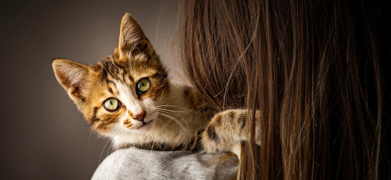 De acordo com pesquisas, a ração bloquaria até 47% dos alérgenos presentes no organismo dos felinos - Getty Images