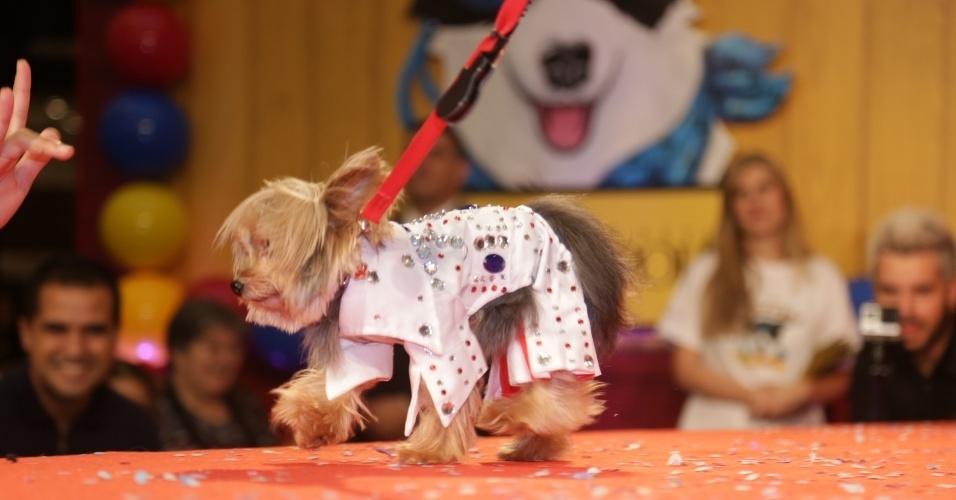 Pingo, vestido de Elvis Presley na edição 2015 do CãoCurso