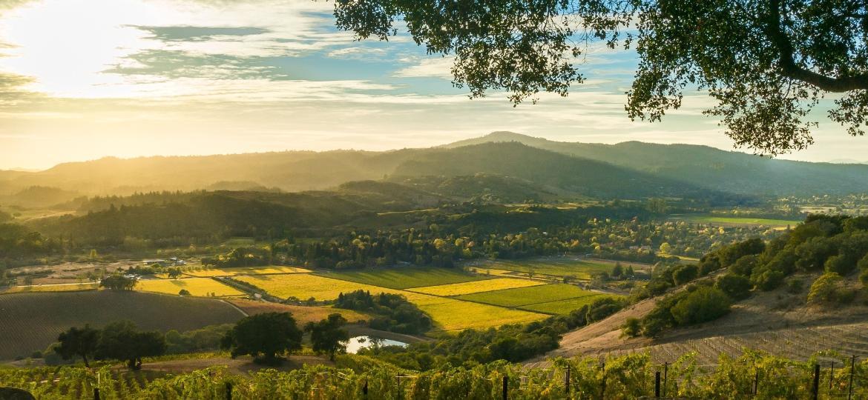 Sonoma, no Estado da Califórnia, nos EUA, é produtora de vinhos exportados ao mundo - Getty Images/iStockphoto