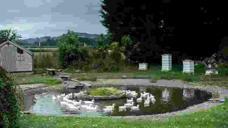 Llangoed Hall, no País de Gales - Divulgação - Divulgação