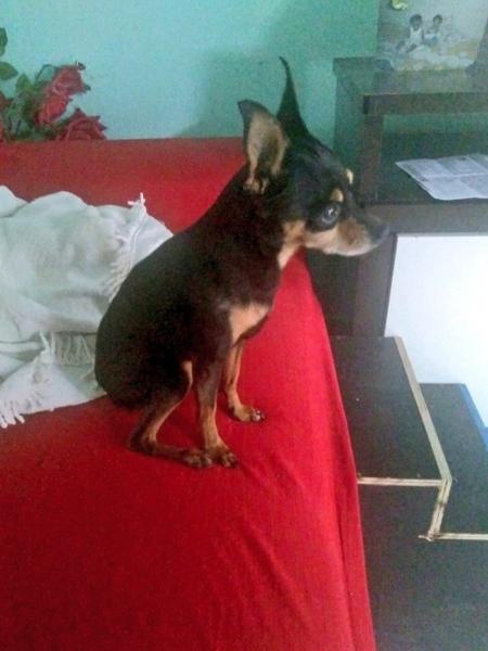 Tico ganhou escadas para subir no sofá - Superjunior/Reprodução Twitter