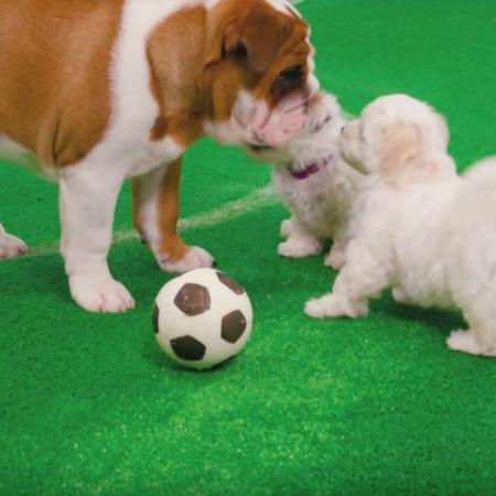 Cachorros jogando futebol - YouTube