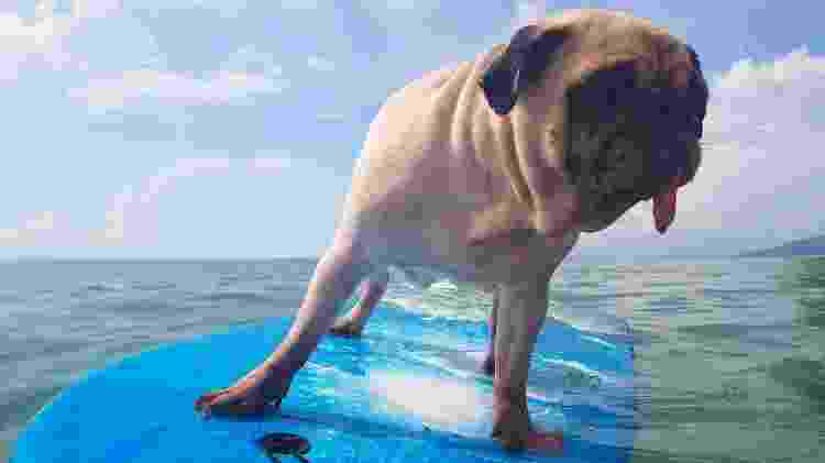 Há diversas praias americanas onde cachorros são bem-vindos e podem surfar - fongleon356/Getty Images/iStockphoto