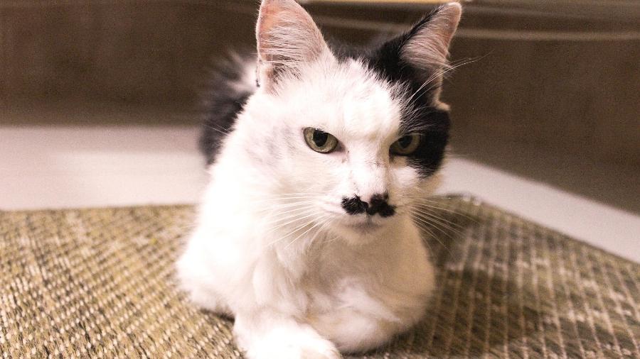 A gatinha Mica, de 11 anos, tem vitiligo - Melissa Vassalli