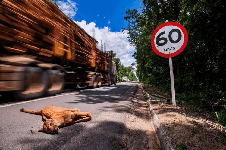 Ampliação da rodovia pode aumentar ainda mais o número de atropelamentos de animais na região - Leonardo Merçon - Leonardo Merçon