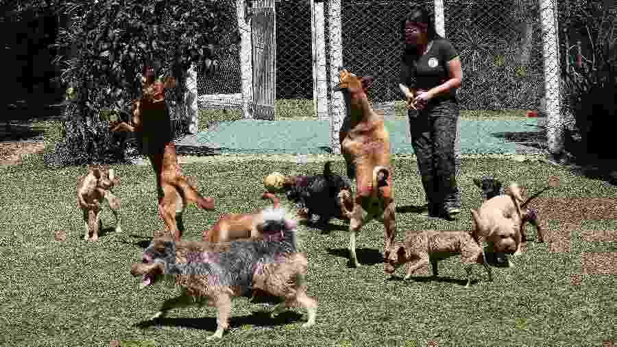 Cães brincam no gramado do Mundo Pet Resort, que oferece serviço de creche e hotel para cães e gatos - Evelson de Freitas/ UOL