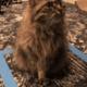 Internautas criam técnica inusitada para manter seus gatos quietinhos - Reprodução/ Twitter @michellemorrow