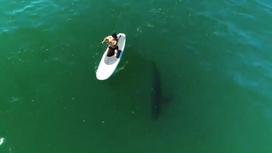 Orlando Bloom remou ao lado de tubarão - Reprodução/Instagram @orlandobloom