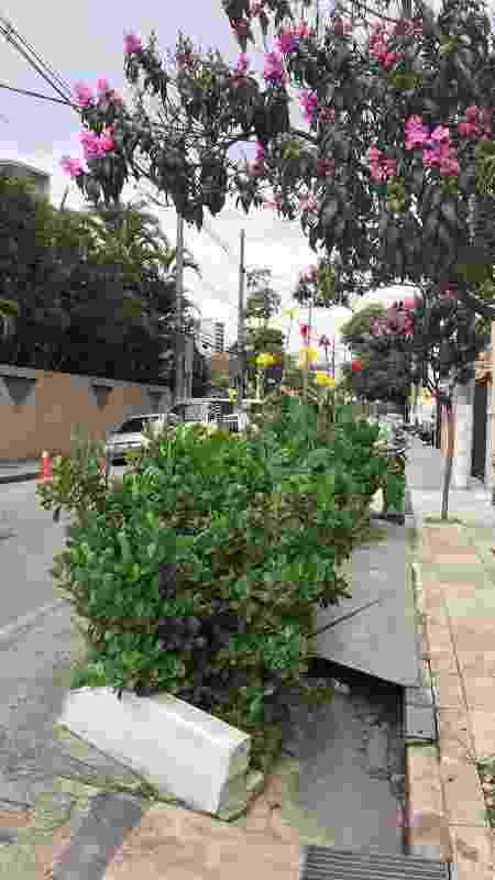 Um dos primeiros Jardins de Chuva foi construído em Pinheiros pelo ambientalista Nik Sabey -