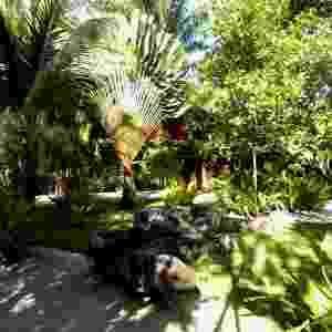 As belas palmeiras ravenalas, popularmente conhecidas como palmeira-dos-viajantes (Ravenala madagascariensis) junto  aos coqueiros (Cocos nucifera L.) dividem o espaço com o gramado formado pela grama esmeralda, desenhos orgânicos compostos pelas porções de areia e um banco feito com tronco de árvore. O jardim com 11 mil m² foi projetado pelo paisagista Marcelo Faisal para uma residência em Trancoso, na Bahia - Divulgação