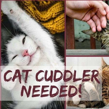 Anúncio de vaga de afagador de gatos de clínica veterinária da Irlanda - Reprodução/Facebook
