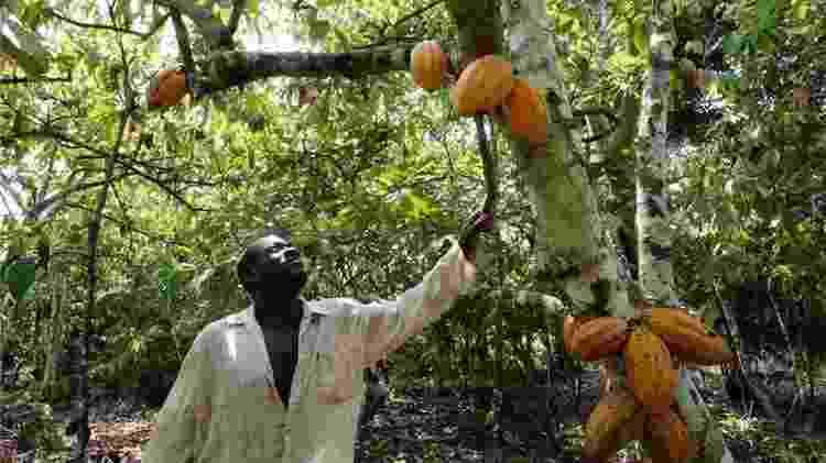 O chocolate começa a sua vida nas sementes em forma de bola de futebol da árvore Theobroma cacao - Getty Images - Getty Images