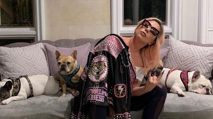 Lady Gaga com os seus cachorros - Reprodução/Instagram