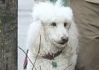 Netflix ganha 1° prêmio em Cannes... para melhor atuação de cachorro - FameFlynet Pictures