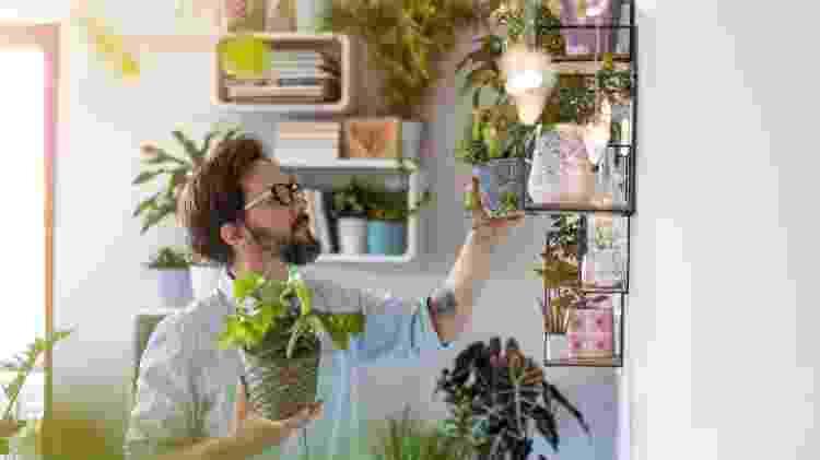 Saber ao menos o nome popular de uma planta ajuda demais a buscar mais informações sobre ela - Getty Images/iStockphoto - Getty Images/iStockphoto