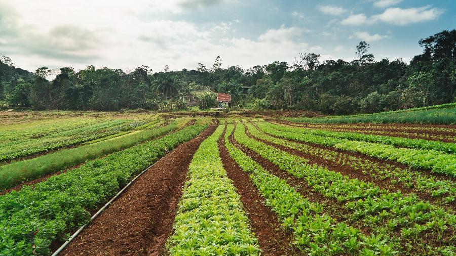Produtores rurais incluídos na plataforma Sampa + Rural - Divulgação