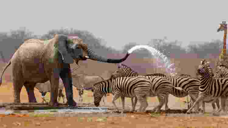Animais no Etosha National Park, Namíbia - johan63/Getty Images/iStockphoto - johan63/Getty Images/iStockphoto