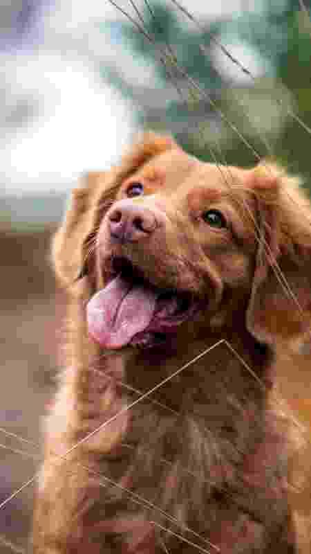 Cachorro - Reprodução/Unsplash/Jamie Street - Reprodução/Unsplash/Jamie Street