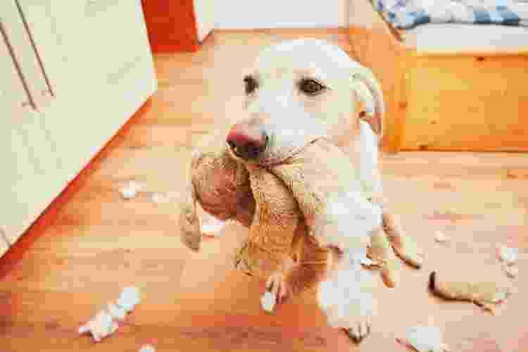 Seu cão é destruidor como o Bowie? Saiba como contornar o problema - Getty Images/iStockphoto - Getty Images/iStockphoto