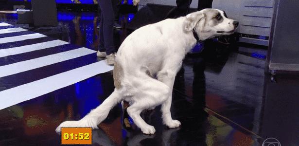 Ao vivo, cachorro faz cocô e dá trabalho à equipe de limpeza do Faustão - Reprodução/TV Globo