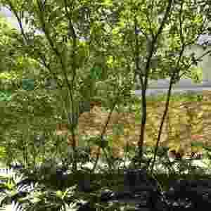 A paisagista Claudia Diamant criou pontos verdes próximos a todas as aberturas da casa na zona sul de São Paulo. Foram usadas espécies de meia sombra e que demandam pouca manutenção. Desta janela é possível ver uma jardineira repleta de xanadus (Philodendron xanadu) circundando as pitangueiras - Reinaldo Canato/ UOL