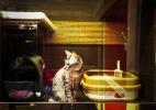 Gato aristocrata: hotel para felinos tem cama de grife e tigelas Swarovski - Reprodução/Facebook/The Wagington