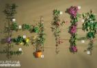 Dez plantas para cobrir o pergolado - Arquitetura & Construção