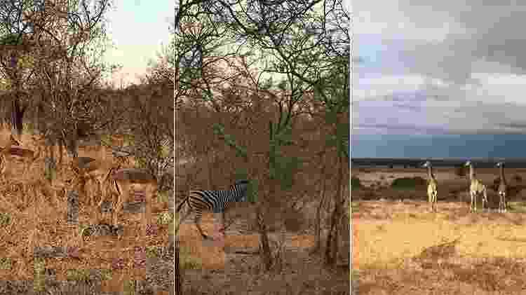 Grazi Massafera vai a safári na África do Sul - Reprodução/Instagram - Reprodução/Instagram