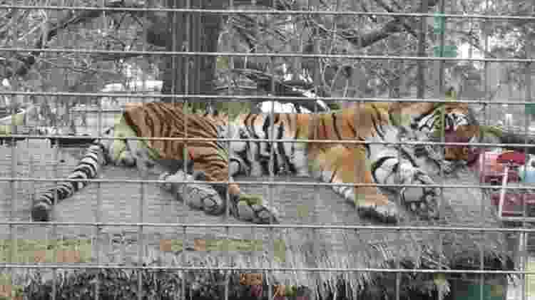 zoo luján - Alex Alves - Alex Alves