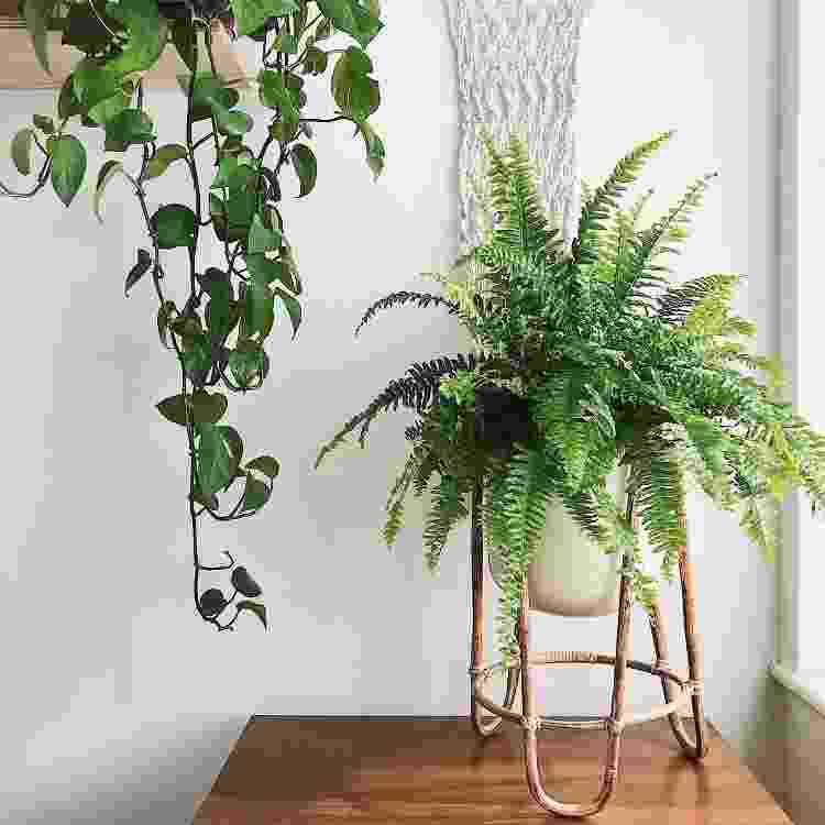 A samambaia será sua aliada na decoração de toda a casa - Reprodução/Pinterest - Reprodução/Pinterest