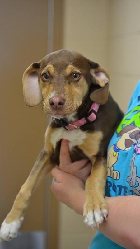 Peanut salvou a vida de uma garotinha de três anos - Reprodução/Facebook