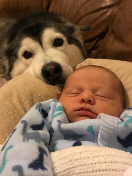 Dá para ter medo desse cachorrão aí? - Reprodução/Instagram