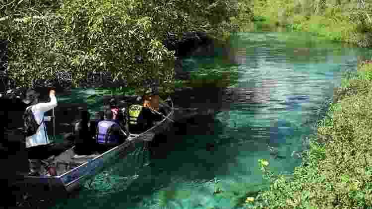 Rio Sucuri, um dos atrativos naturais de Bonito, no Mato Grosso do Sul  - Eduardo Vessoni/UOL - Eduardo Vessoni/UOL