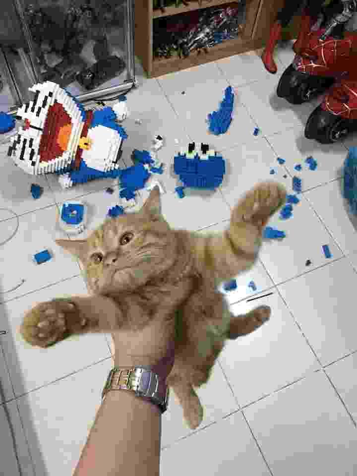 Gato destrói enfeite de 2.434 peças que demorou uma semana para ser montado - Reprodução/Facebook