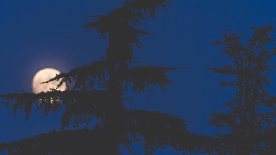Calendário lunar de 2021: as trocas de lua e as fases mais potentes observação - Getty Images
