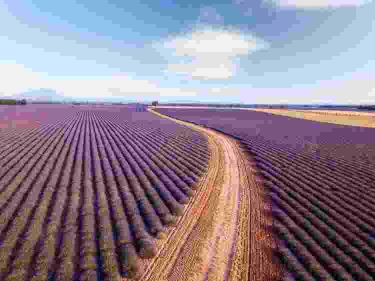 Campos de lavanda na Provença: verão azul, branco e vermelho - Francesco Riccardo Iacomino/Getty Images - Francesco Riccardo Iacomino/Getty Images