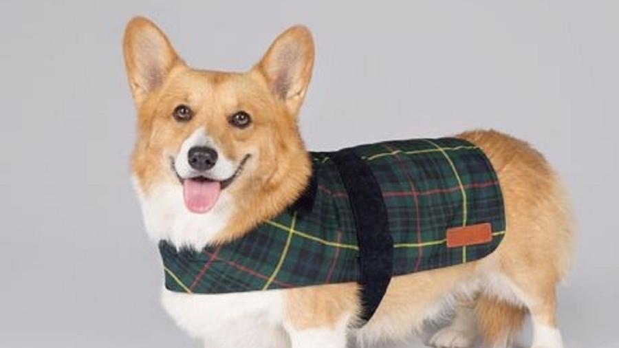 Rainha Elizabeth colocou à venda uma linha de produtos para cachorros - Reprodução/Royal Collection Trust