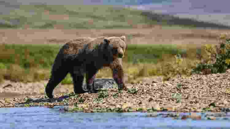 Katmai National Park, no Alasca - Getty Images/iStockphoto - Getty Images/iStockphoto
