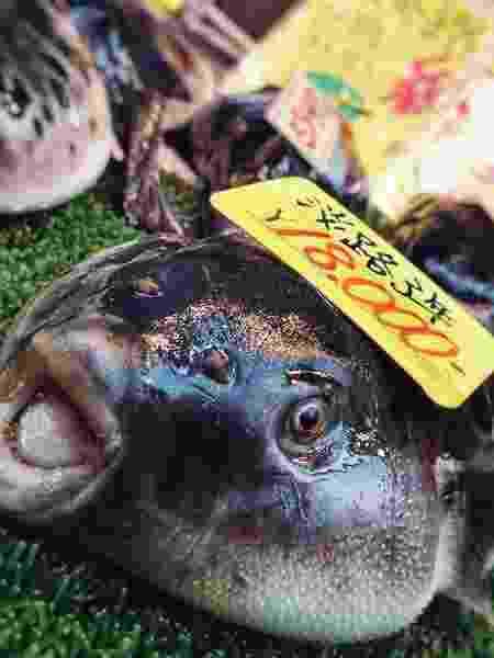 Baiacu vendido no Japão - iStock - iStock