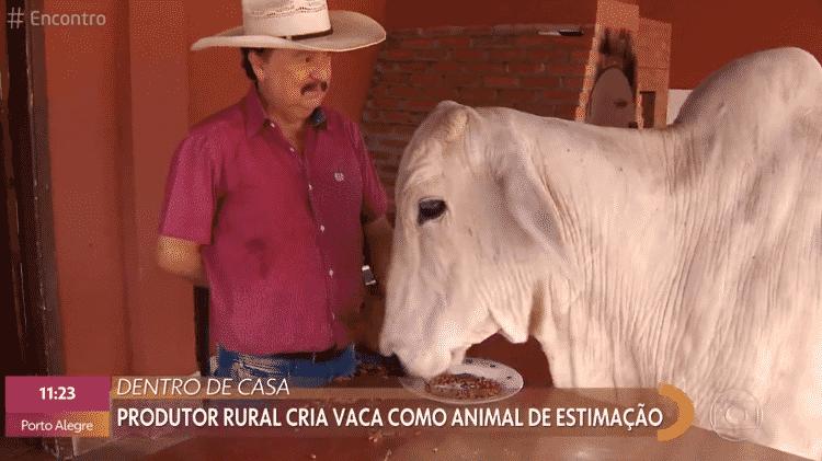 Vaca Joaquina come dentro de casa e em prato - Reprodução/Globoplay - Reprodução/Globoplay
