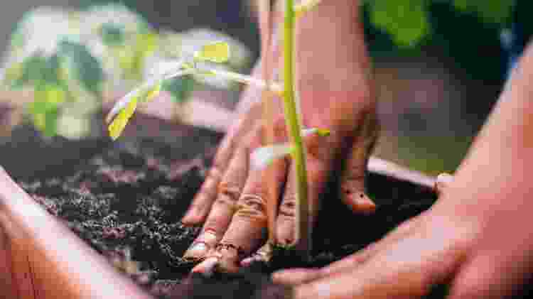 Cultivo de plantas - Getty Images - Getty Images