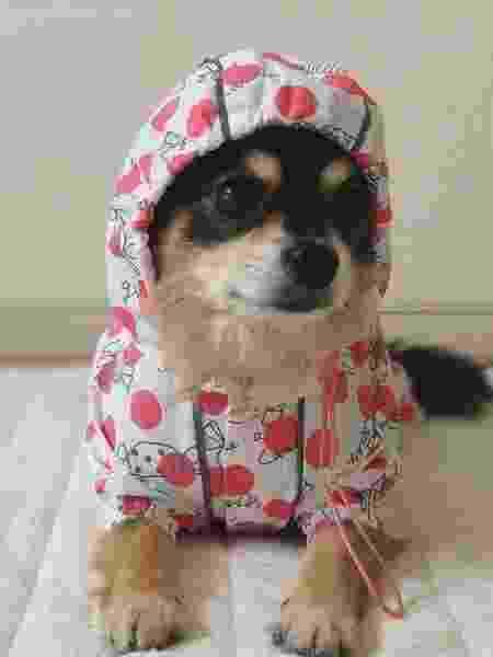 Veja modelos de capa de chuva para cachorro - Reprodução/Instagram @ponstagram.pon