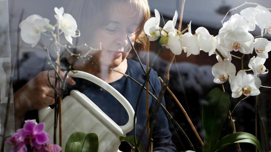 Quanto de água colocar no vaso? Quantas vezes por semana? E se a planta estiver num cachepô sem furo? Descubra essas e outras respostas de uma vez por toda - Getty Images/iStockphoto