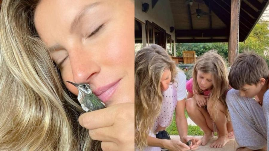 Gisele Bündchen e os filhos resgataram e cuidaram de beija-flor com asa machucada - Reprodução/Instagram
