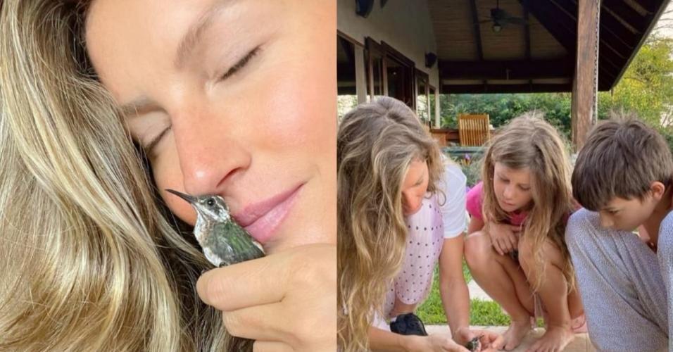 Gisele Bündchen e os filhos resgataram e cuidaram de beija-flor com asa machucada