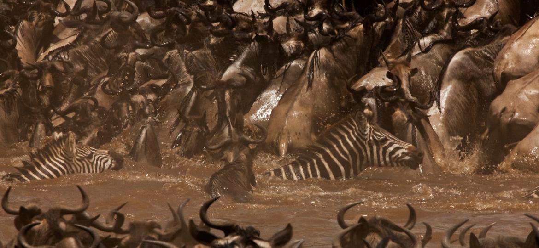 Maasai Mara e outras reservas do Quênia recebem turistas atrás de aventura e instalações de luxo - Divulgação/ GreatPlainsConservation